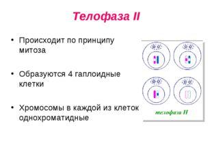 Телофаза II Происходит по принципу митоза Образуются 4 гаплоидные клетки Хром