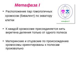 Метафаза I Расположение пар гомологичных хромосом (бивалент) по экватору клет