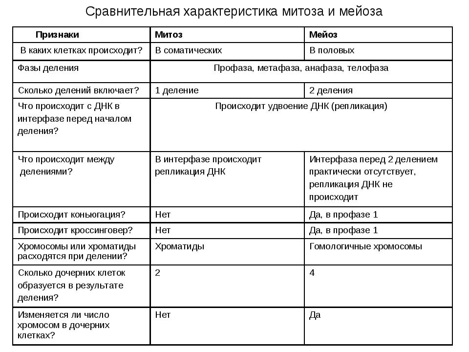 Сравнительная характеристика митоза и мейоза ПризнакиМитозМейоз В каких кле...