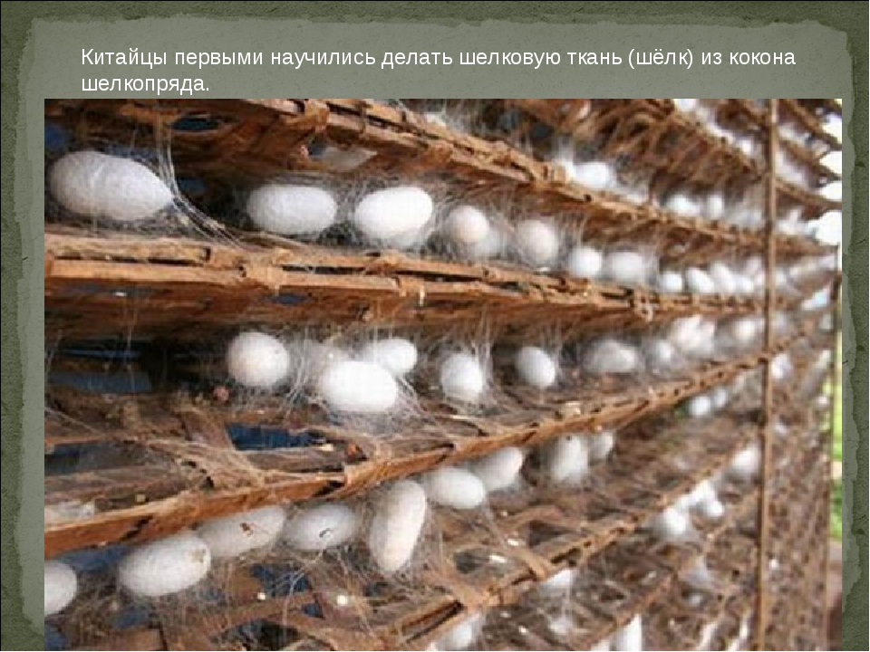 Китайцы первыми научились делать шелковую ткань (шёлк) из кокона шелкопряда.