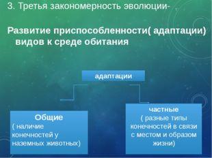 3. Третья закономерность эволюции- Развитие приспособленности( адаптации) вид