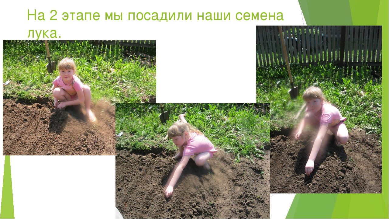 На 2 этапе мы посадили наши семена лука.