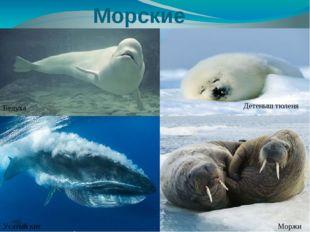 Морские животные Белуха Моржи Детеныш тюленя Усатый кит