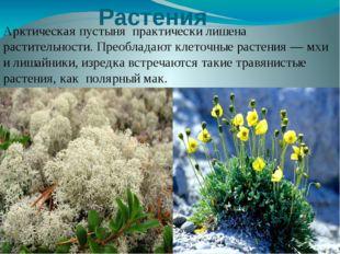 Растения Арктическая пустыня практически лишена растительности. Преобладают