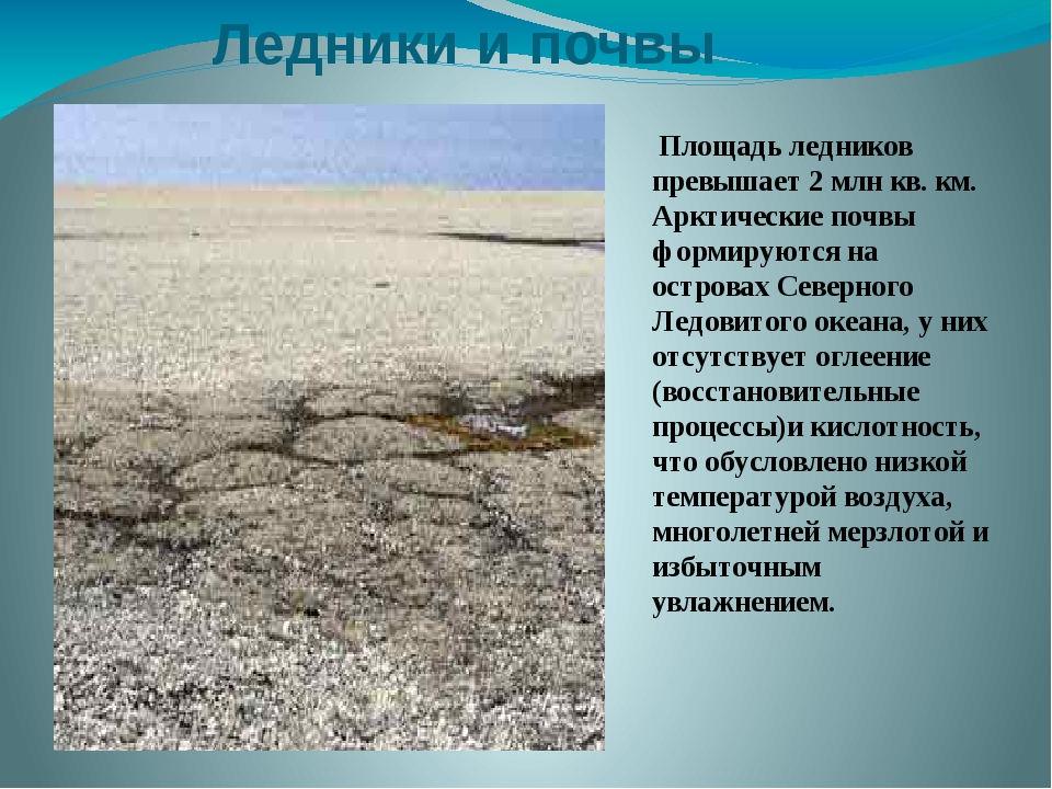 Ледники и почвы Площадь ледников превышает 2 млн кв. км. Арктические почвы фо...