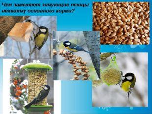Чем заменяют зимующие птицы нехватку основного корма?