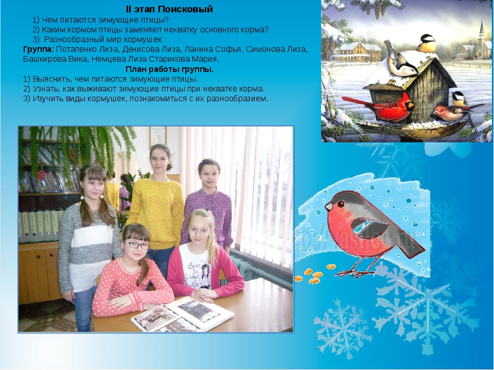 II этап Поисковый 1) Чем питаются зимующие птицы? 2) Каким кормом птицы замен...
