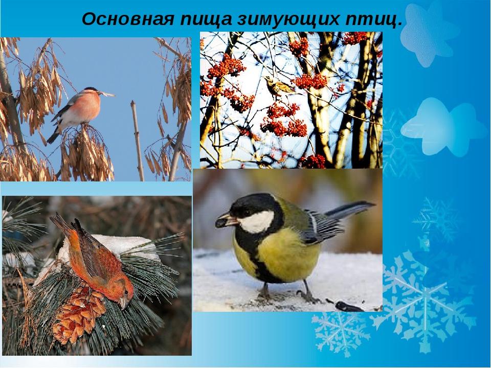 Основная пища зимующих птиц.