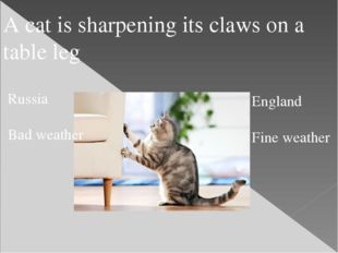 A cat is sharpening its claws on a table leg Russia Bad weather England Fine