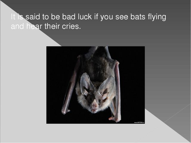 It is said to be bad luck if you see bats flying and hear their cries.