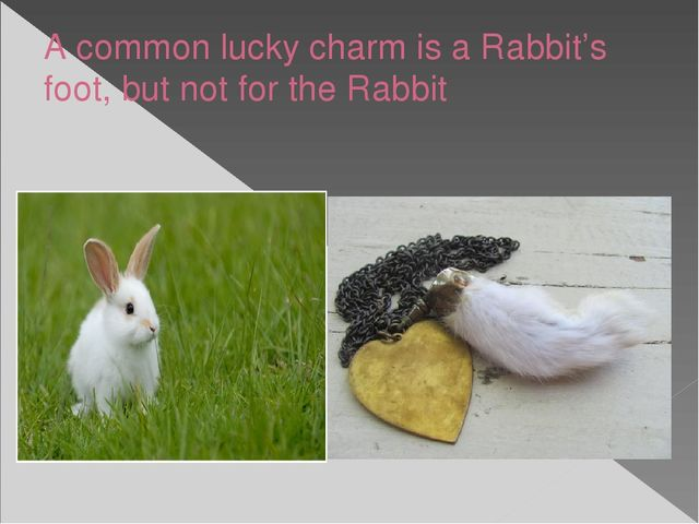 A common lucky charm is a Rabbit's foot, but not for the Rabbit