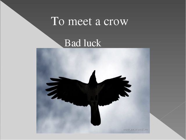 Bad luck To meet a crow