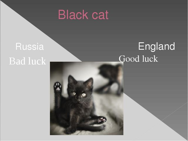 Black cat Russia England Good luck Bad luck