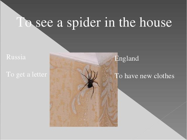 To see a spider in the house Russia To get a letter England To have new clothes