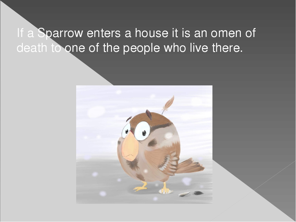 If a Sparrow enters a house it is an omen of death to one of the people who l...