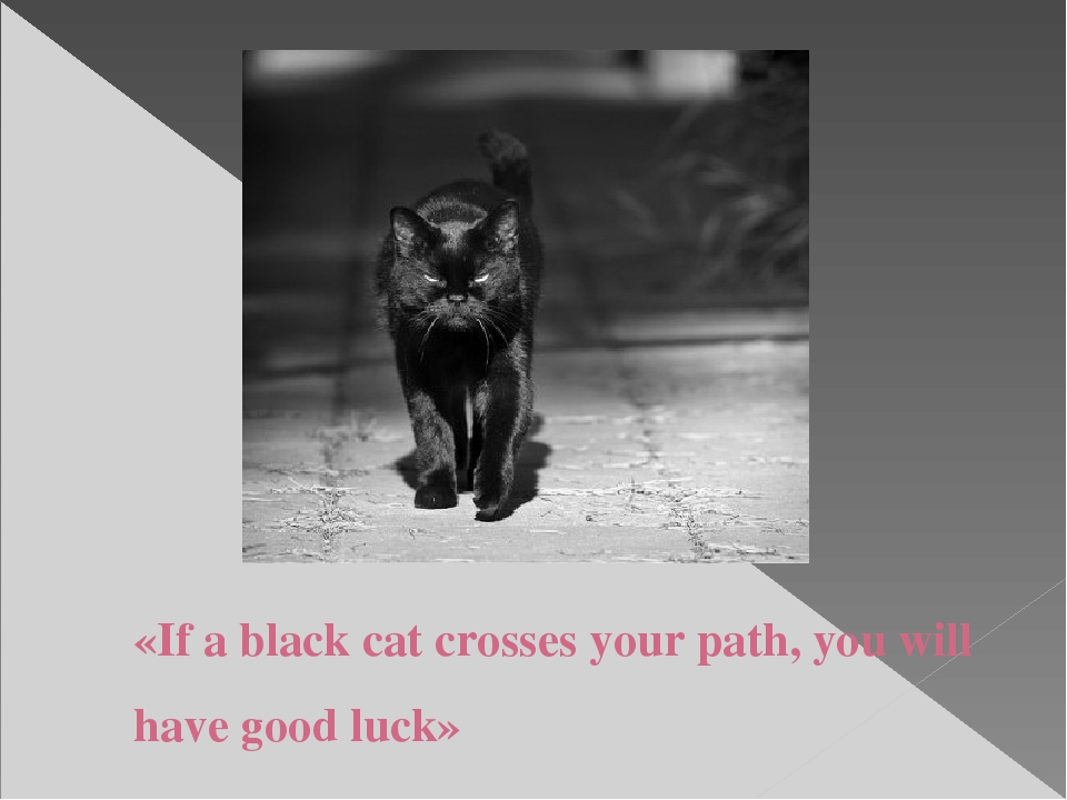 «If a black cat crosses your path, you will have good luck»