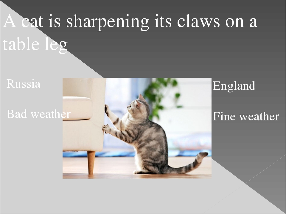 A cat is sharpening its claws on a table leg Russia Bad weather England Fine...