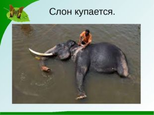 Слон купается.