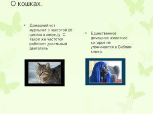 О кошках. Домашний кот мурлычет с частотой 26 циклов в секунду. С такой же ча