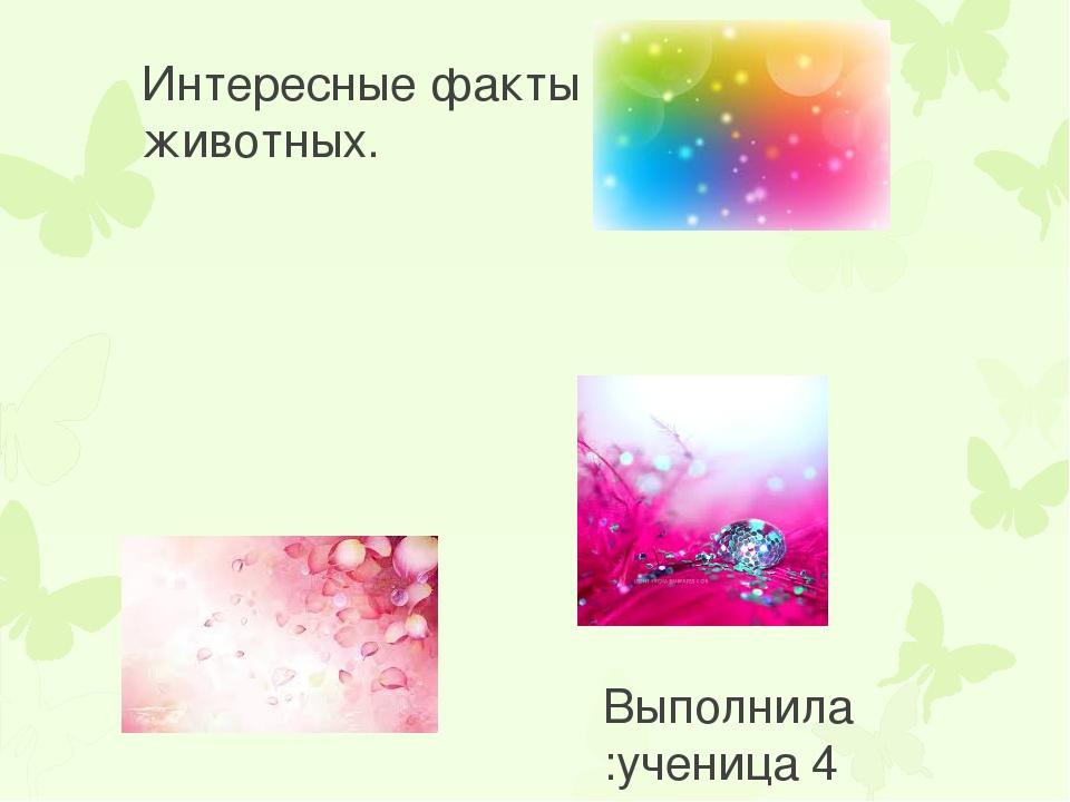 Интересные факты о животных. Выполнила :ученица 4 «Е»класса Данилова София. Р...
