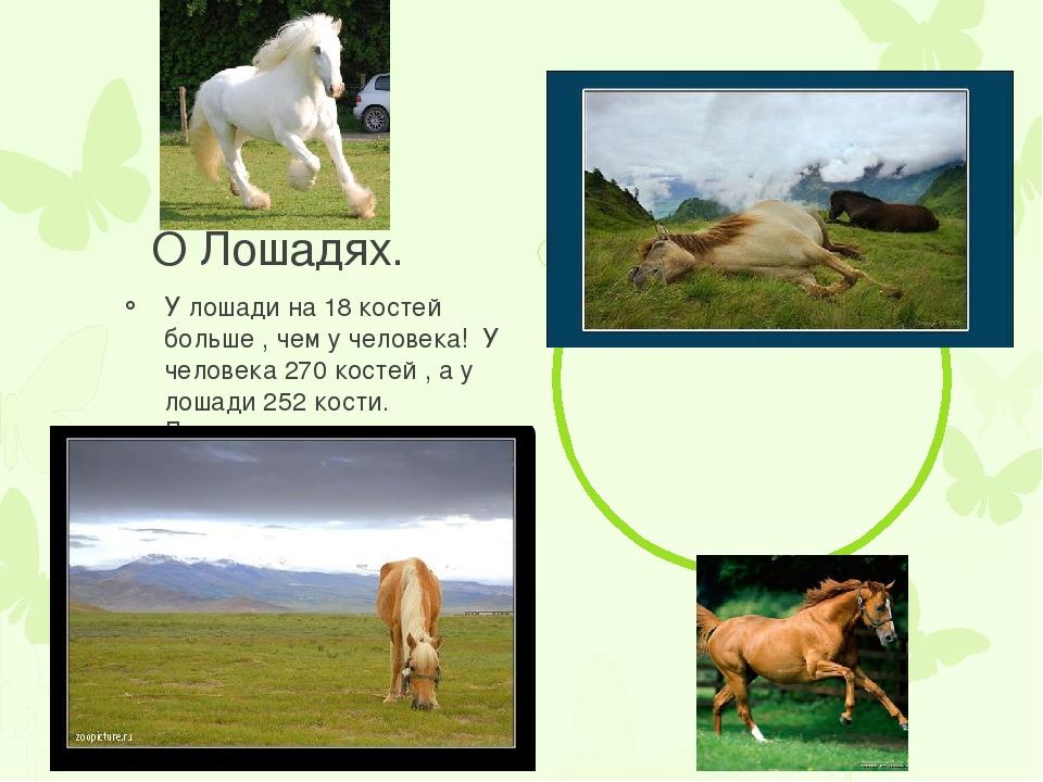 О Лошадях. У лошади на 18 костей больше , чем у человека! У человека 270 кос...