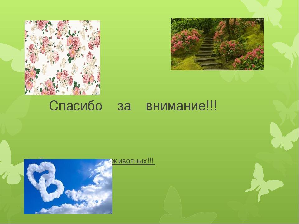 Спасибо за внимание!!! Берегите природу и животных!!!