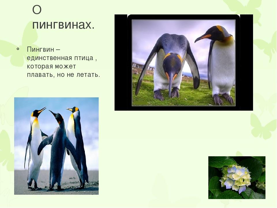 О пингвинах. Пингвин – единственная птица , которая может плавать, но не лета...