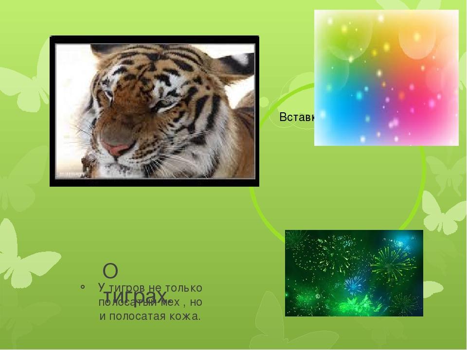 О тиграх. У тигров не только полосатый мех , но и полосатая кожа.