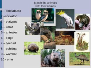 Match the animals with their names 1 – kookaburra 2 –cockatoo 3 – platypus 4