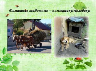 Домашние животные – помощники человека
