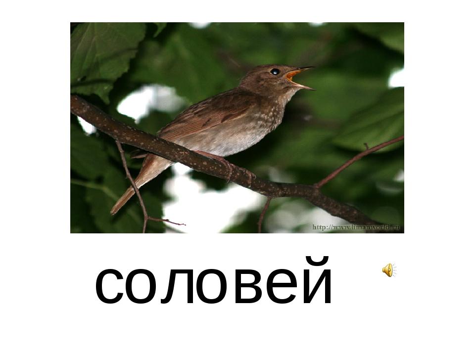 с о л о вей