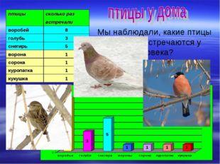 Мы наблюдали, какие птицы и как часто встречаются у жилища человека? птицыск