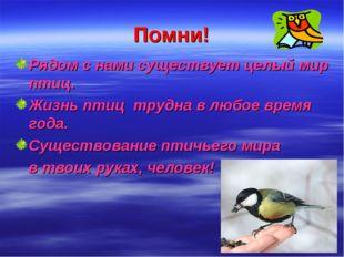 Помни! Рядом с нами существует целый мир птиц. Жизнь птиц трудна в любое врем