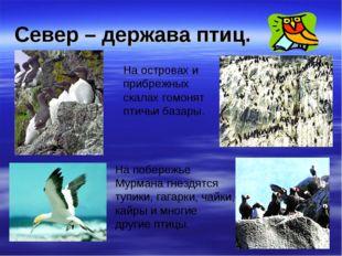 Север – держава птиц. На островах и прибрежных скалах гомонят птичьи базары.