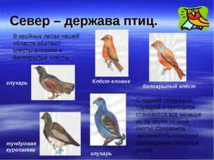 Север – держава птиц. В хвойных лесах нашей области обитают клесты-еловики и