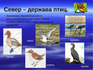 Север – держава птиц. Хозяевами порожистых рек и многочисленных озер смело мо