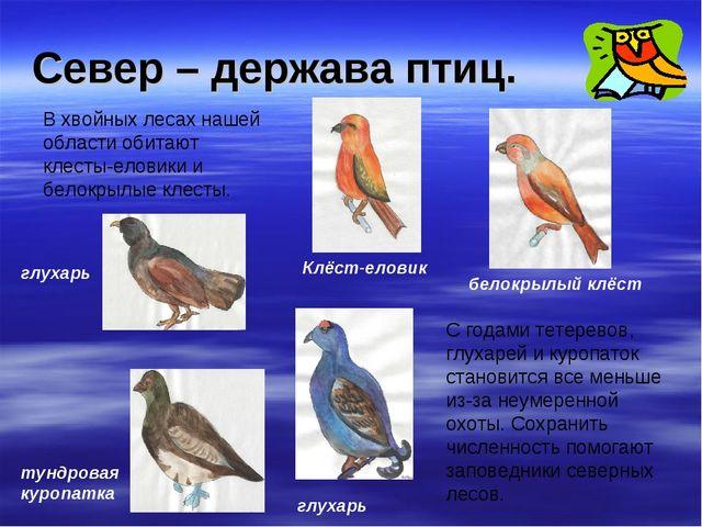 Север – держава птиц. В хвойных лесах нашей области обитают клесты-еловики и...