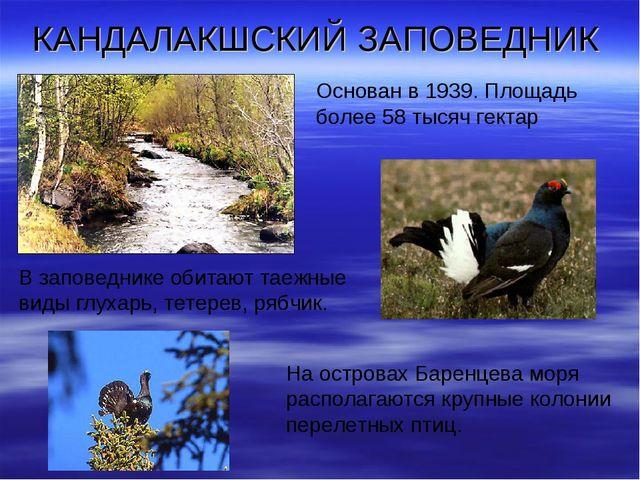 КАНДАЛАКШСКИЙ ЗАПОВЕДНИК Основан в 1939. Площадь более 58 тысяч гектар В запо...