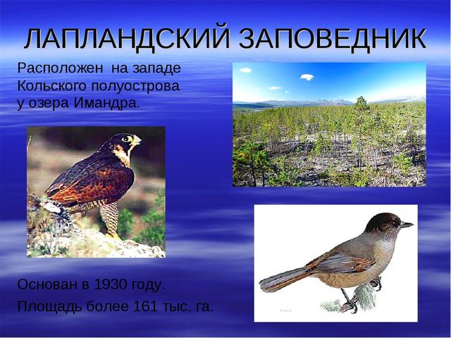 ЛАПЛАНДСКИЙ ЗАПОВЕДНИК Расположен на западе Кольского полуострова у озера Има...
