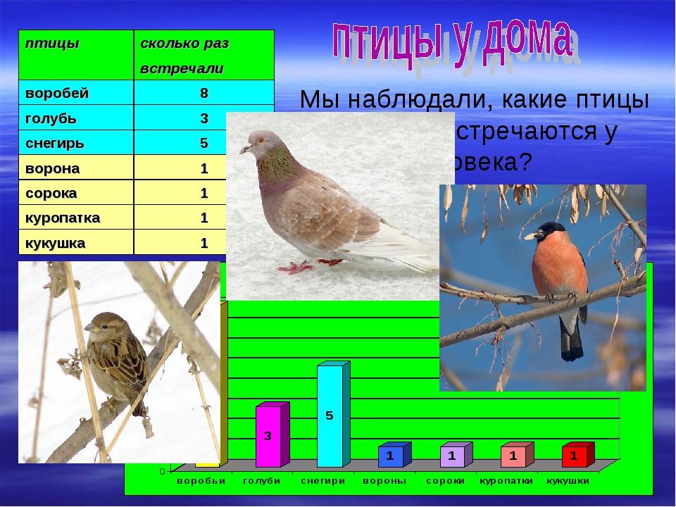 Мы наблюдали, какие птицы и как часто встречаются у жилища человека? птицыск...