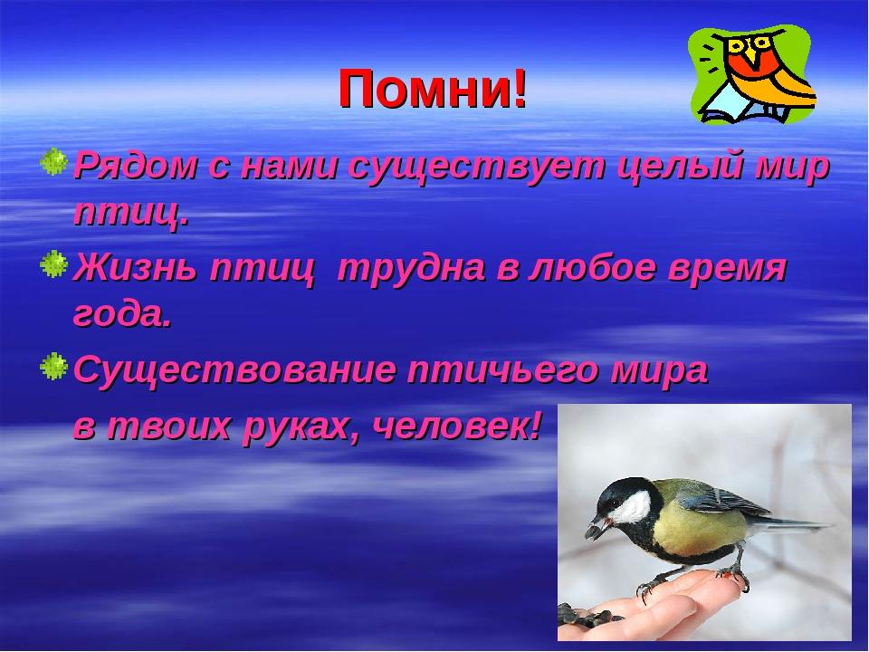 Помни! Рядом с нами существует целый мир птиц. Жизнь птиц трудна в любое врем...