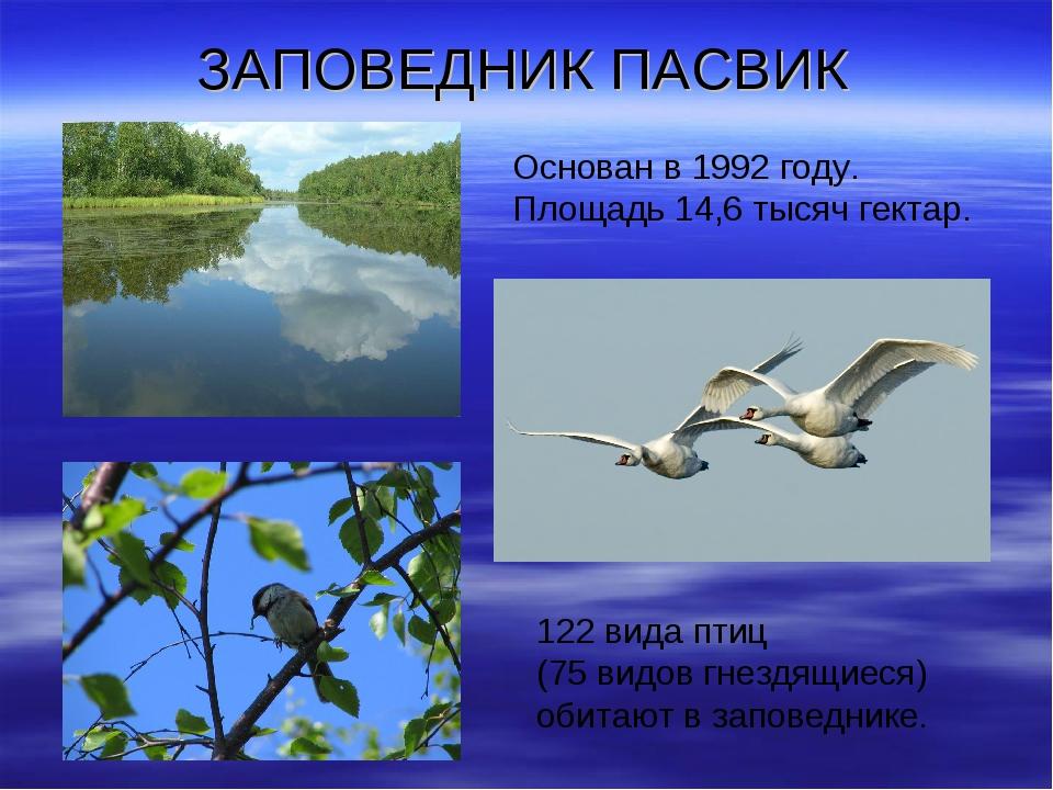 ЗАПОВЕДНИК ПАСВИК 122 вида птиц (75 видов гнездящиеся) обитают в заповеднике....