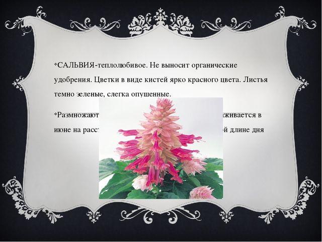 САЛЬВИЯ-теплолюбивое. Не выносит органические удобрения. Цветки в виде кисте...