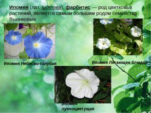 Ипомея (лат.Ipomoea),фарбитис — род цветковых растений, является самым боль