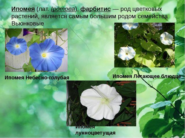 Ипомея (лат.Ipomoea),фарбитис — род цветковых растений, является самым боль...