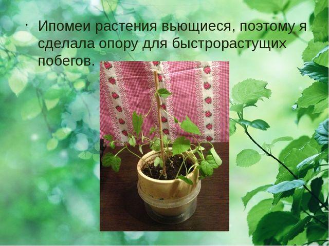 Ипомеи растения вьющиеся, поэтому я сделала опору для быстрорастущих побегов.