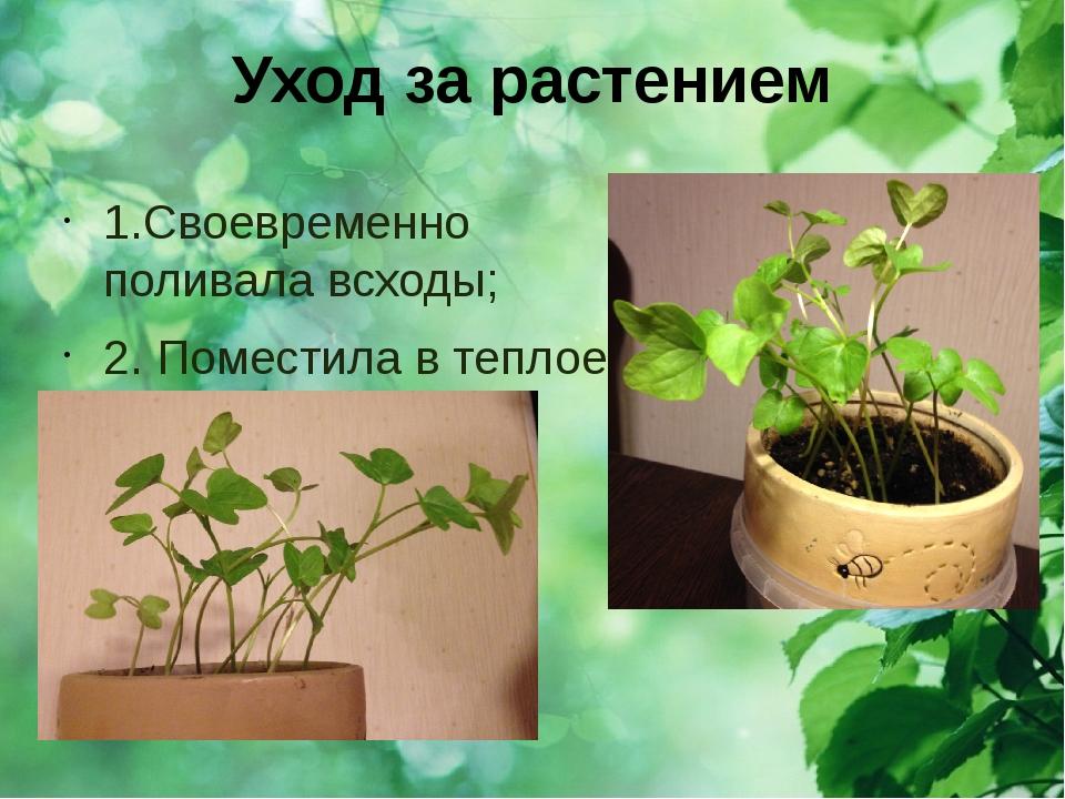 Уход за растением 1.Своевременно поливала всходы; 2. Поместила в теплое и све...