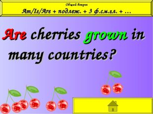 Are cherries grown in many countries? Общий вопрос Am/Is/Are + подлеж. + 3 ф.