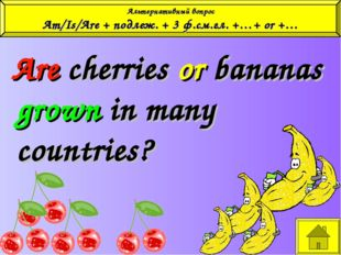 Are cherries or bananas grown in many countries? Альтернативный вопрос Am/Is