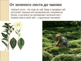 От зеленого листа до чаинки Чайный лист - это еще не чай. Ведь в продажу чай